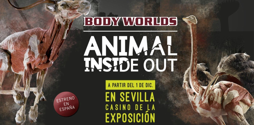 Animal Inside Out, una exposición sobre mundo animal en Sevilla 04 | Sevilla con los peques