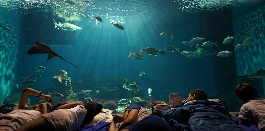Aquarium of Seville Night with Sharks | Sevilla con los peques