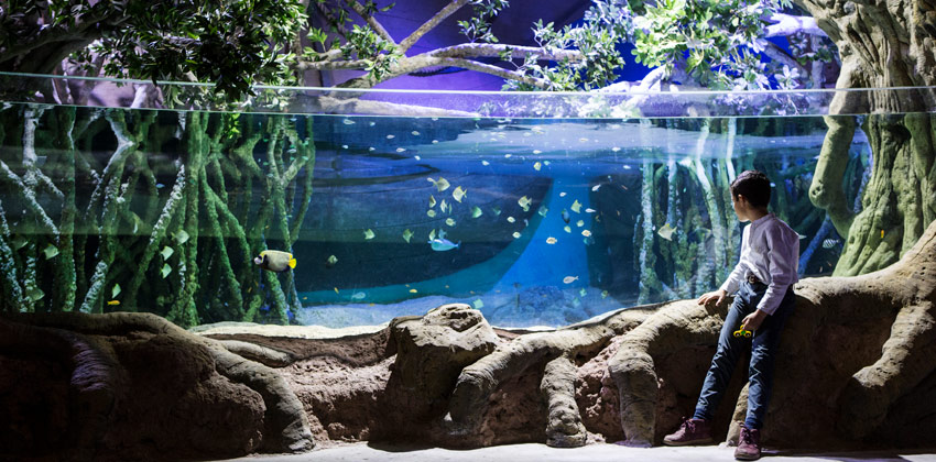 Aquarium of Seville: a boy watching fishes | Sevilla con los peques